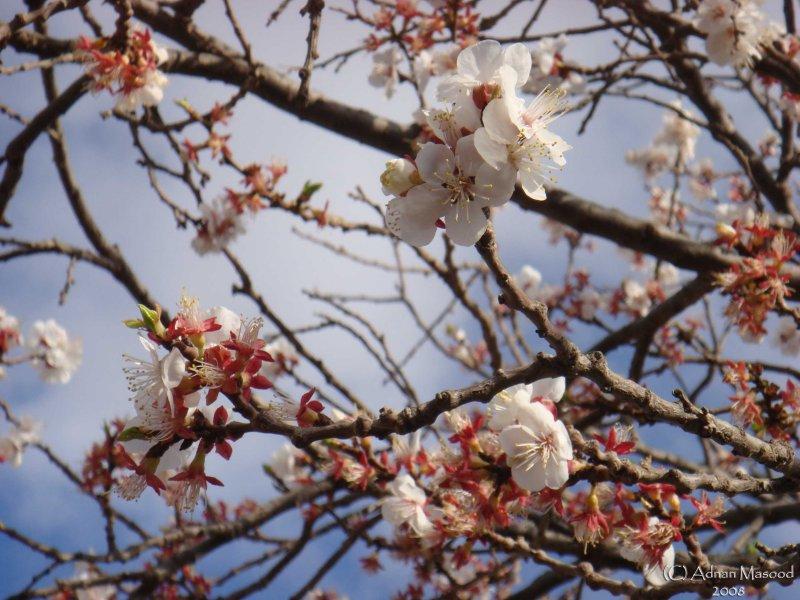 Spring Flowers in SA - 044.JPG