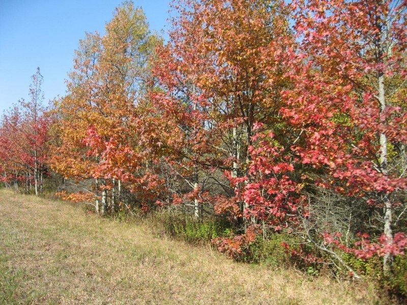Talimena Trail Fall 07