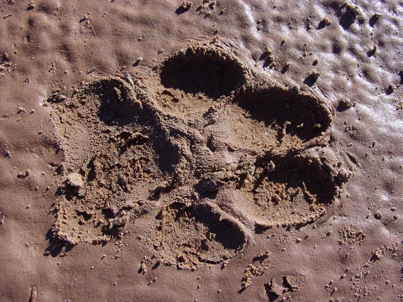 What What kind of foot print is this ?????