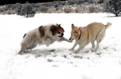 Snow Play Too