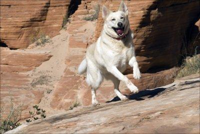 One very happy dog