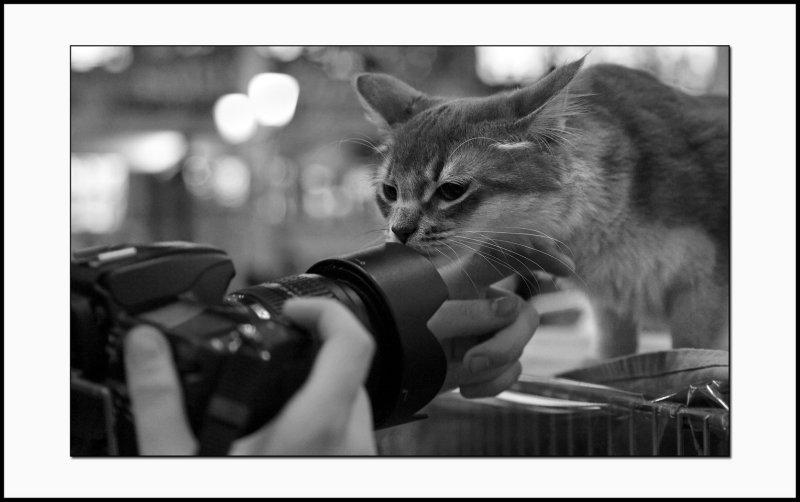 Le chat et le photographe