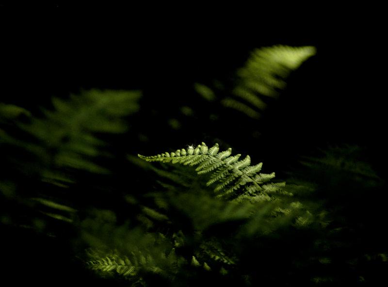 free-form ferns 258