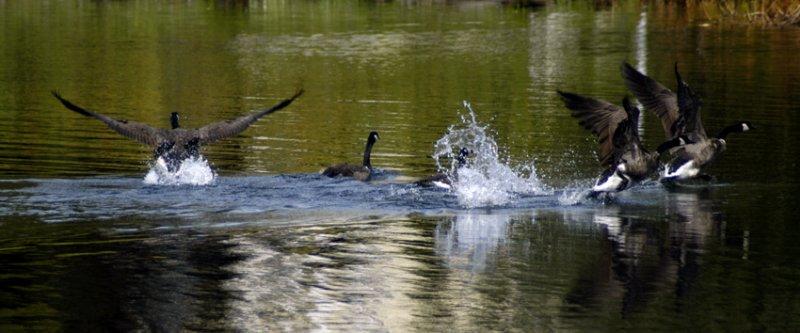 flee as a bird 178.jpg