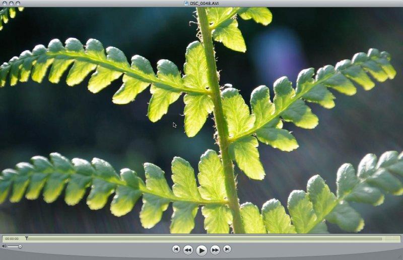 nikonD5000-720-frame.jpg