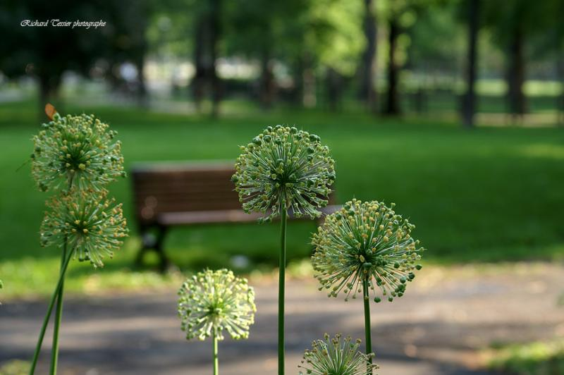 Fleurs pict0008.jpg
