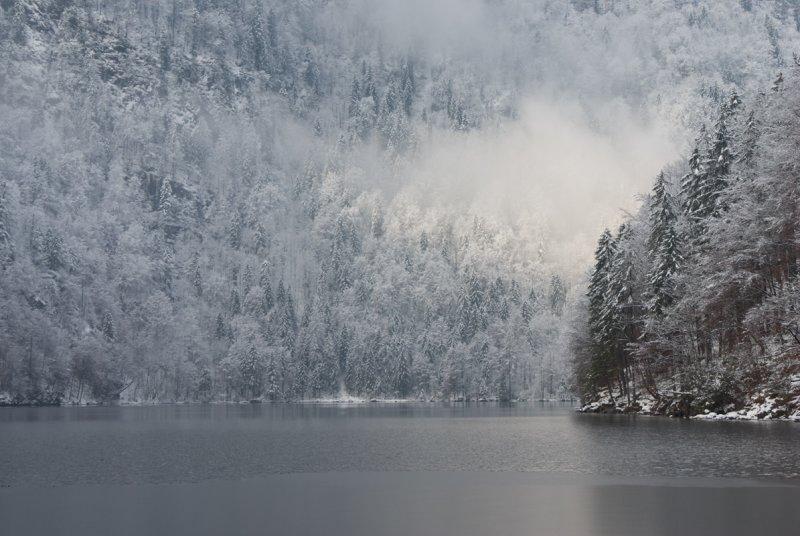Wood on Lake Konigssee near Salzburg