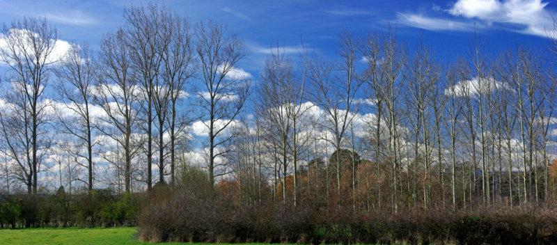 Trees near Clyst St Mary (HDR)