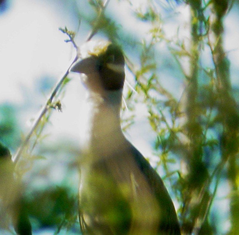 111-01068 Yel Cr Nt Heron through the trees.JPG