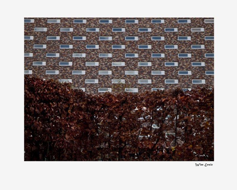 autumn-wall