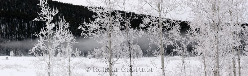 195 Oxbow Bend Frosted Trees 2 P.jpg