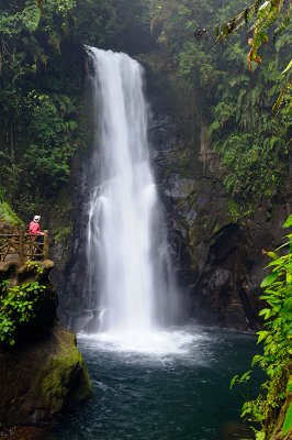 158 Rainforest Waterfall 1.jpg