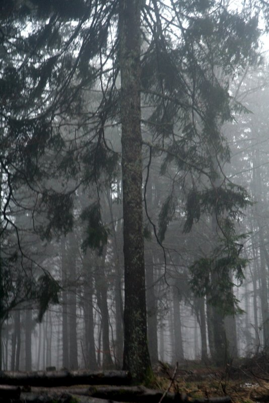 stormy forest.