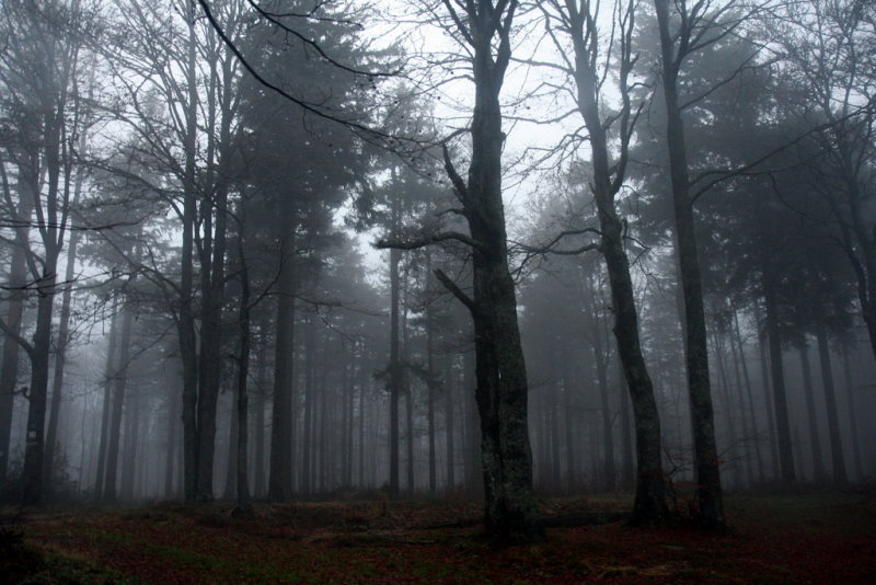 stormy and dark forest.