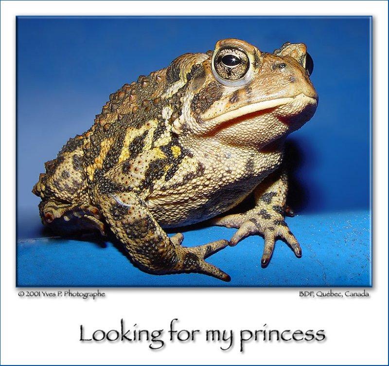 Où est ma princesse ???