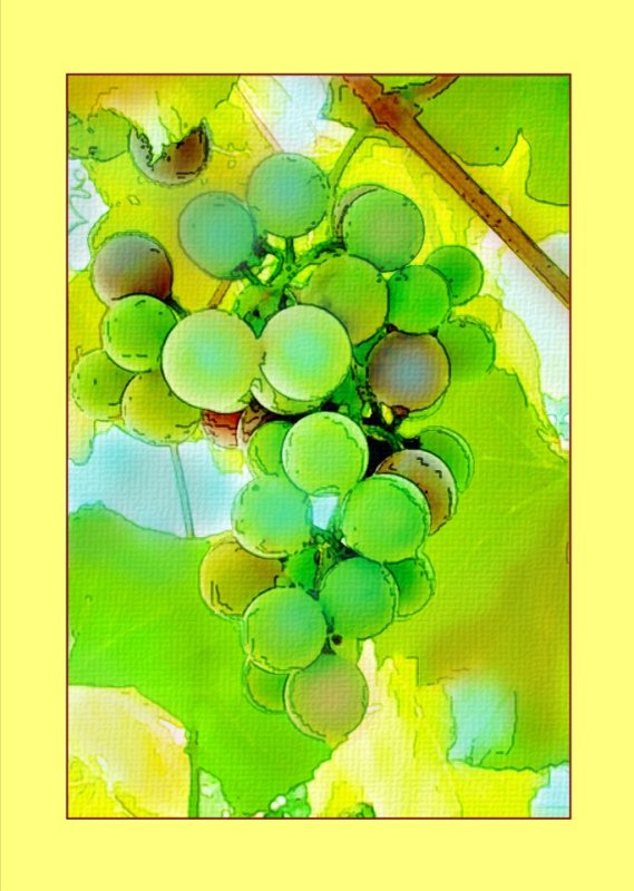 Grapes Version 1