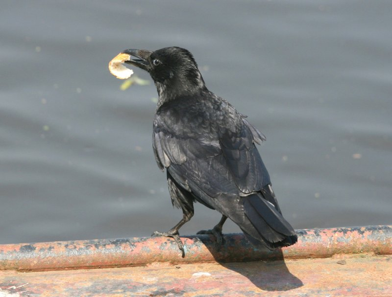 I think it is a Rook
