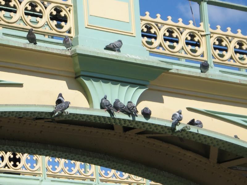 Rock doves taking a siesta.