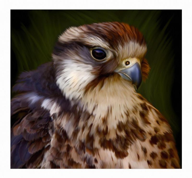 Hawk (full size)