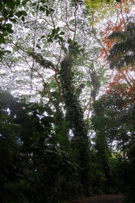 Hawaii 2008-146