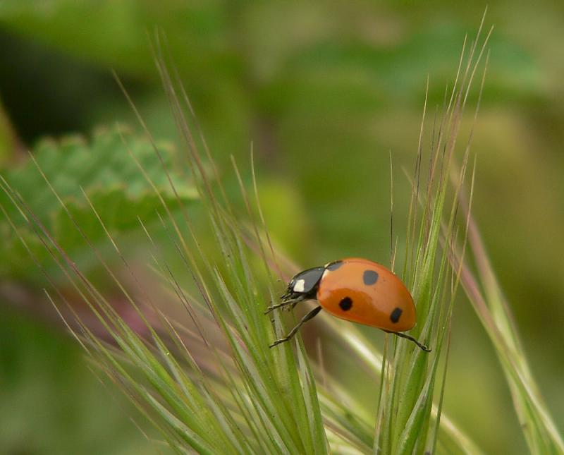 Lady Bug Balance - LaRee