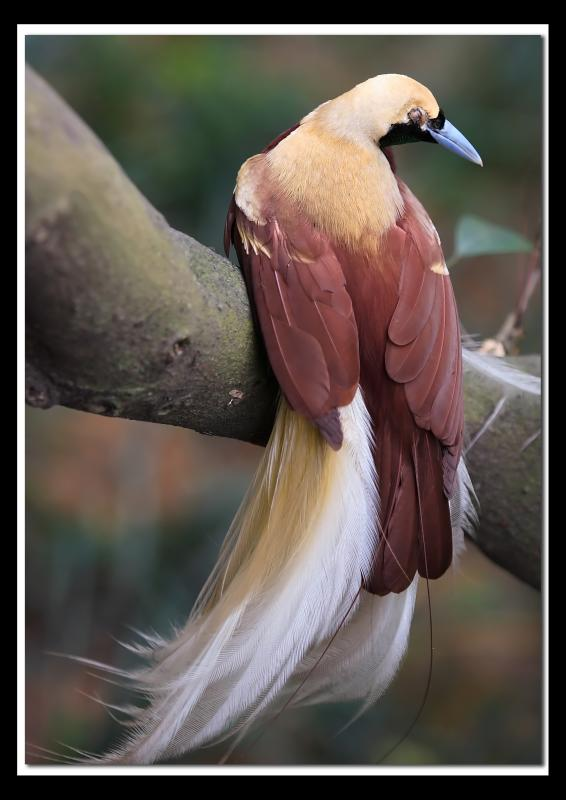 Beautiful bird 1.jpg