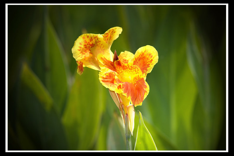 Flower bokeh.jpg