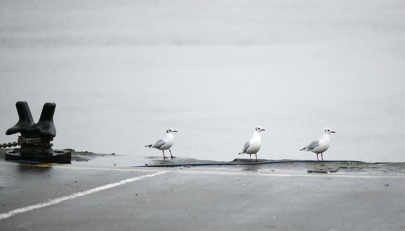 Three gulls waiting for a Bus