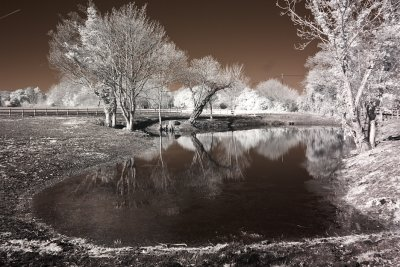 March taken with a black and white infrared camera