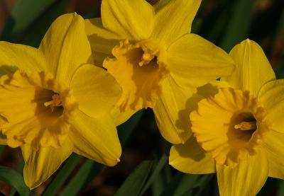 Yellow Spring2.jpg