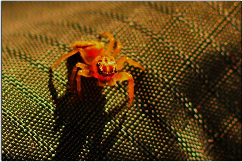 Spider on a Hat