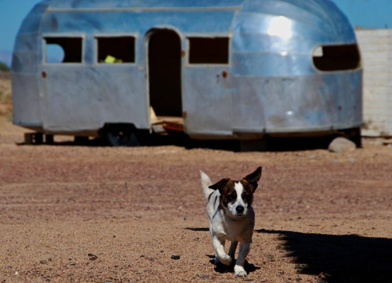 Dog and Airstream Trailer, Newberry Springs, California