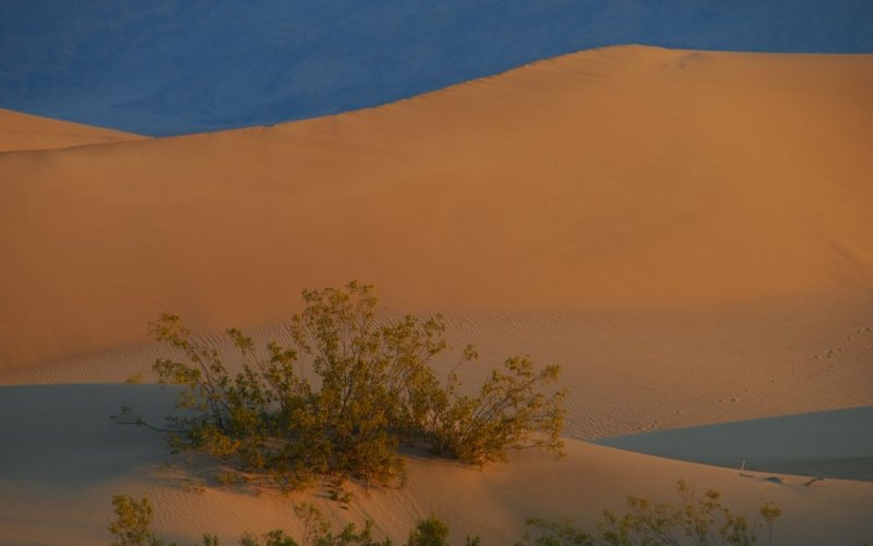 Dawn over the Sand Dunes
