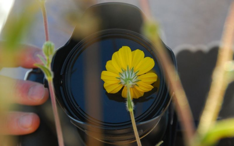 Up-Close Photography