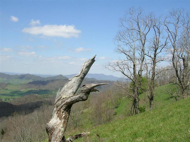 Looking Towards Buchanan County