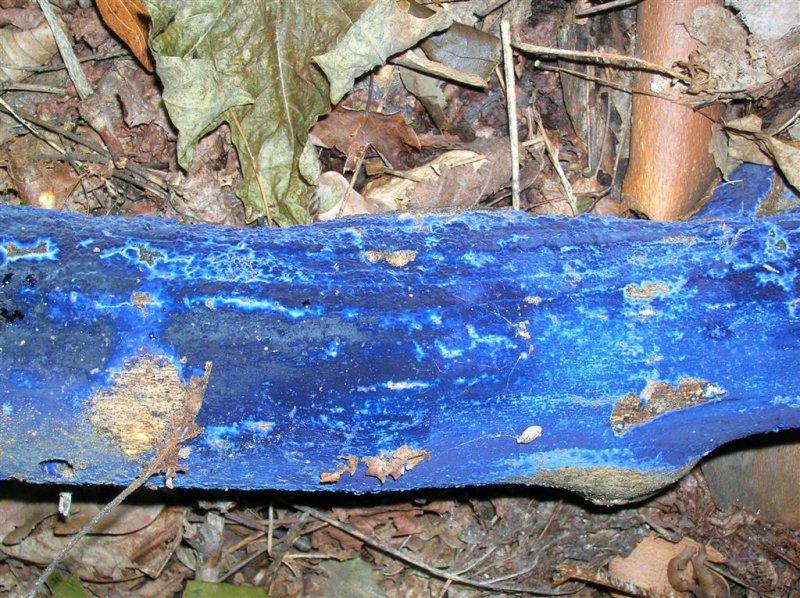 Velvet Blue Spread
