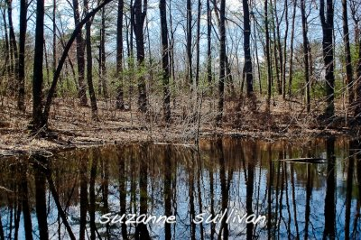 vernal pool chestnut wilmington.jpg