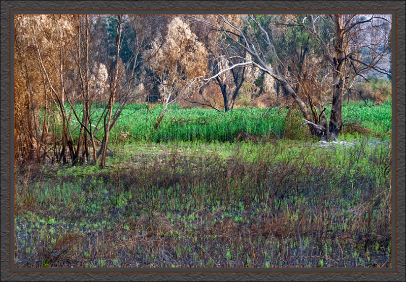 Swamp area near the Jordan park