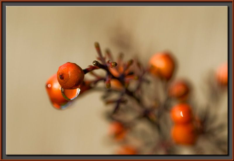 The weeping fruit