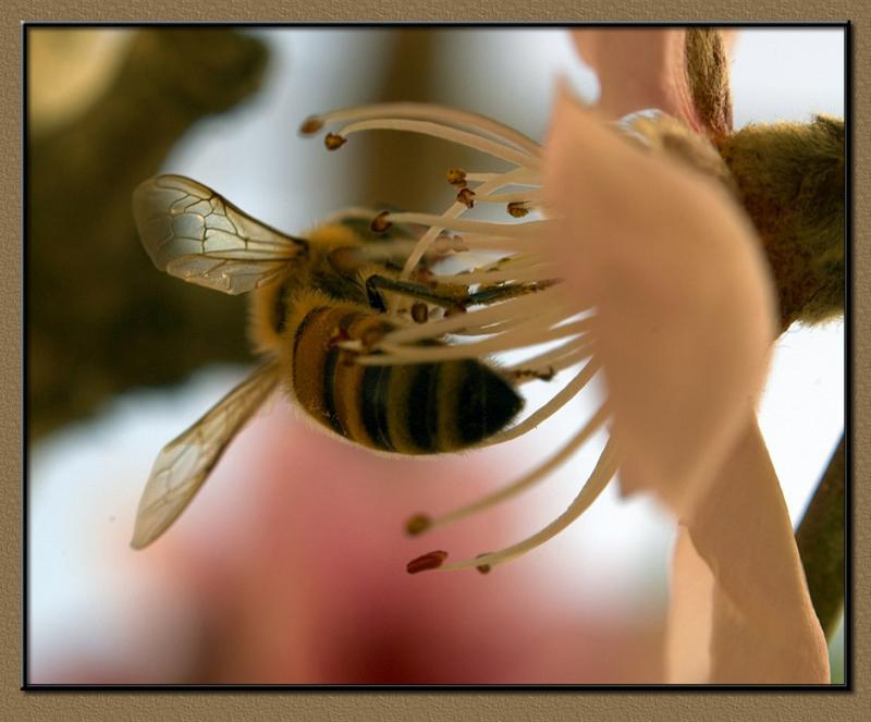 Delicious nectar