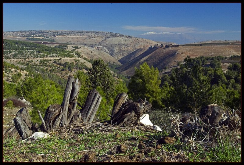 Mt. Hermon view from mt. Puah - Upper Galilee