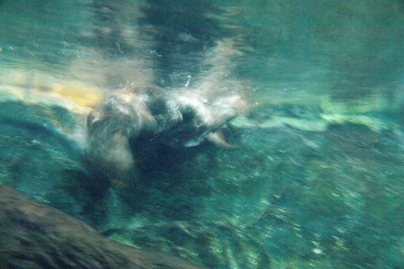 COEX Aquarium - Otters in the water having fun