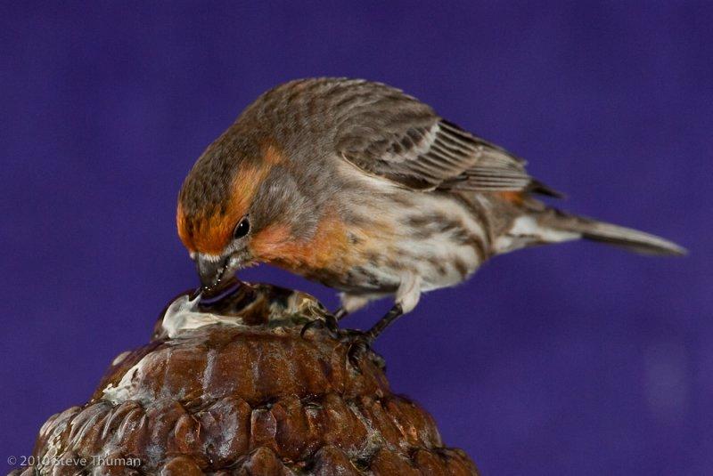 Another Backyard Bird