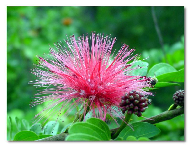 pinkflower1.jpg