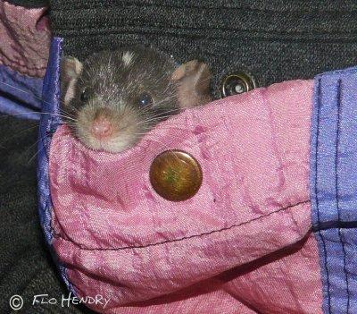 Pocket Pal