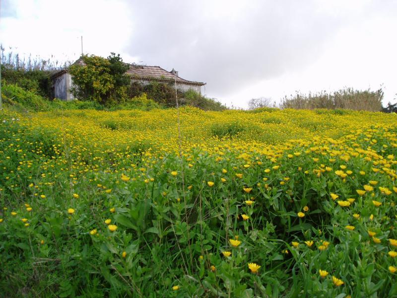 Old house in field of dandelions