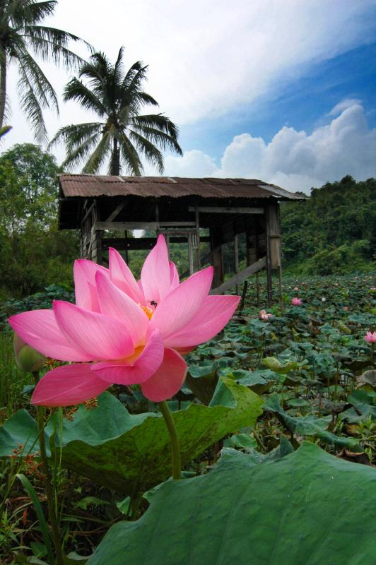 Guard House of Lotus Ponds