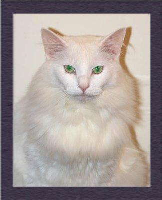 January 8, 2010  -  Wilson the Psycho Cat