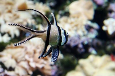 Seoul Aquarium