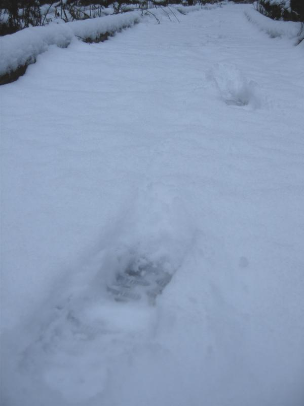 Tracks on the boardwalk